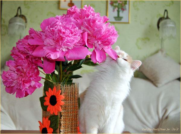 Кошка Айа и букет пионов. Всемирный день кошки. Автор фотографии: Илья LukBigBox Химич